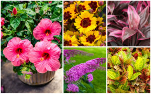 12 Perfect Plants for Outdoor Pots in Florida