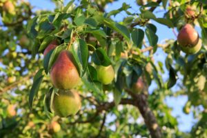 8 Perfect Shade-Tolerant Fruit Plants
