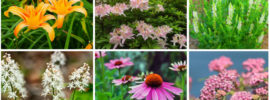 12 Perfect Plants for a Rain Garden
