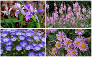 10 Perfect California Groundcover Plants