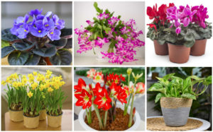 15 Best Houseplants to Give as Gifts