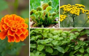15 Awesome Plants that Repel Flies