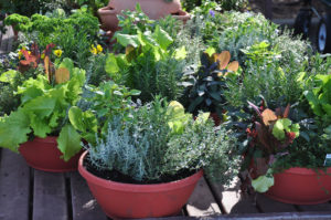 Tips on How to Grow Vegetables in Containers