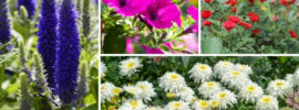 12 Best Plants for Sunny Borders (Plus Growing Tips)