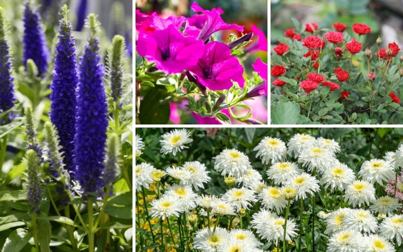 Plants for Sunny Borders