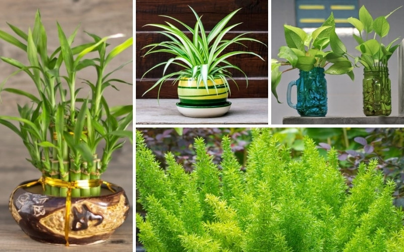 11 Best Plants for Bathrooms