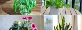 Plants That Can Grow From Cuttings